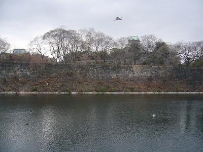 大阪城公園の水鳥たち 東外堀