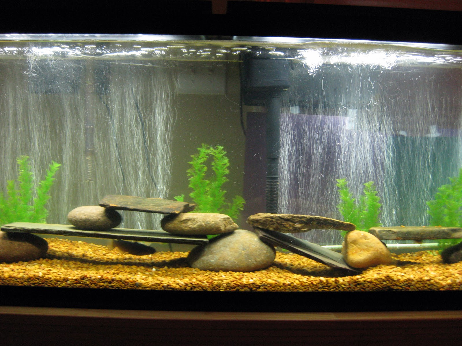 Small fish tank setup all about aquarium fish set up for Fish tank video