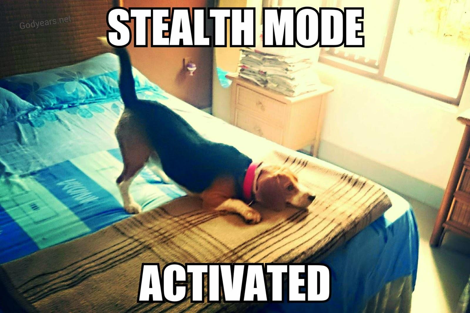 beagle time