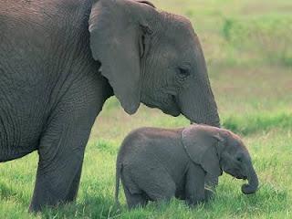 słonie potomstwo