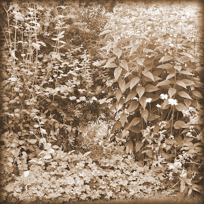 black and white photo of foliage
