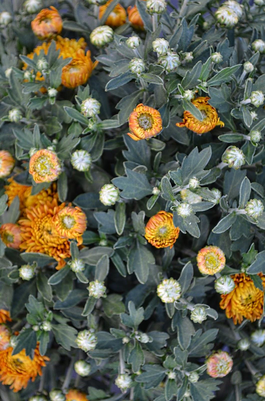 Piante fiori sementi sardegna vendita ingrosso e for Piante vendita