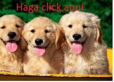 HAGA CLICK AQUÍ