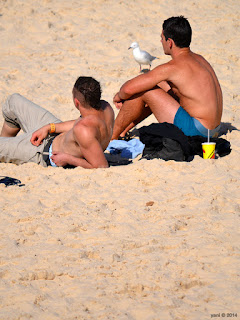 bondi tourists