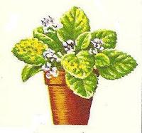 planta doente