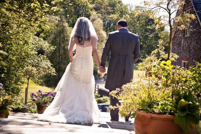 Yorkie in wedding