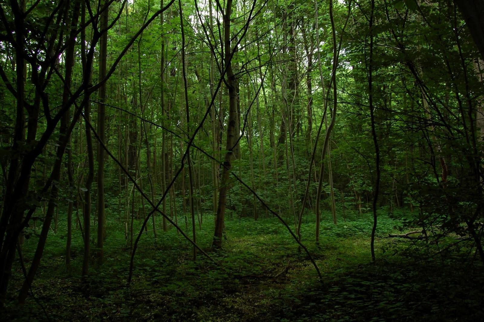Bezaubernde landschaften der leipziger auenwald for Auenwald leipzig