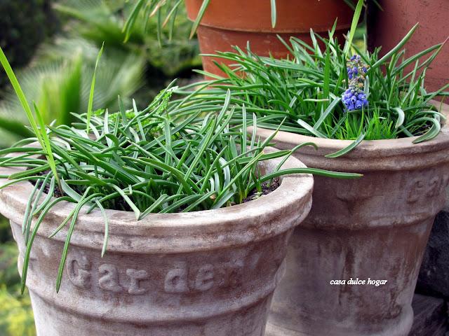 Casa dulce hogar flores de invierno y otros tesoros del - Tengo pulgas en casa ...