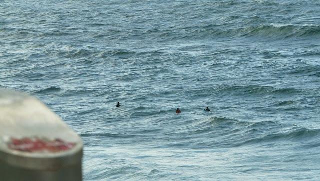 comprar tabla surf sopelana05