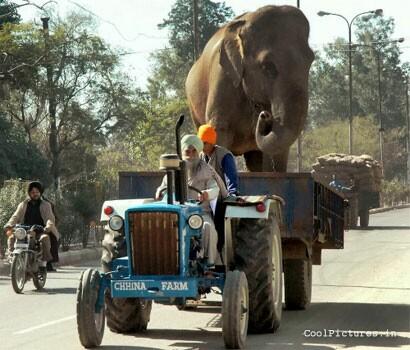 Elephant Tractor Funny