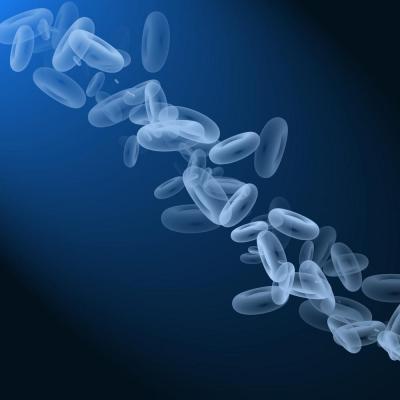 los globulos blancos bajos: