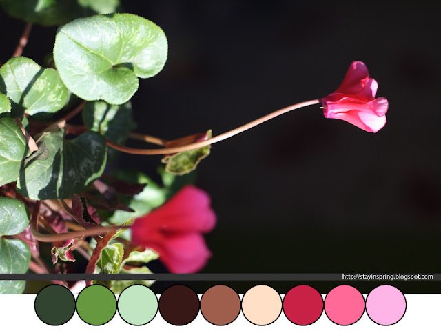 Colour palette cyclamen