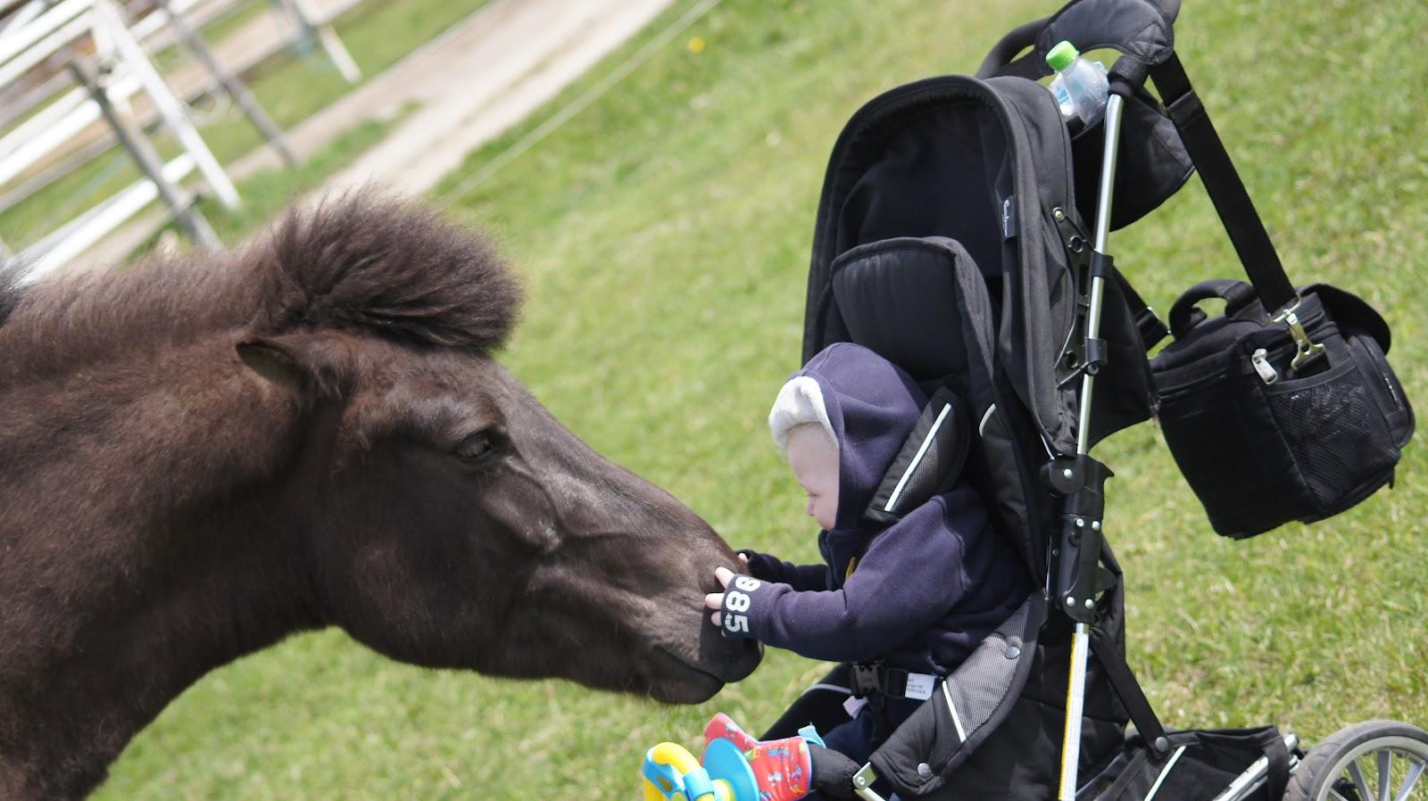 lillhästen i stav