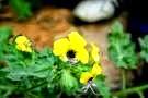 sağlık, sağlıklı yaşam, sağlıklı bitkiler, şifalı bitki