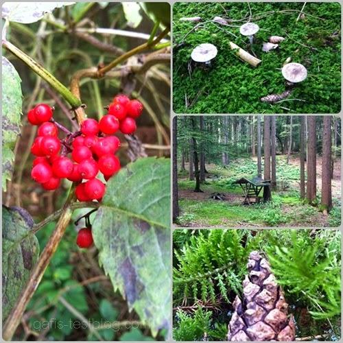 Früchte des Waldes und Futterkrippe