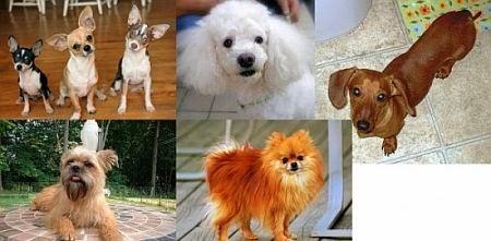 Ranking cães