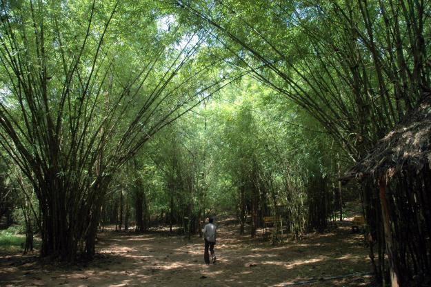 Forest area Maredumilli