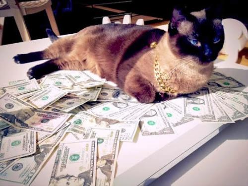 Os gatos que ganharam milhões no Youtube