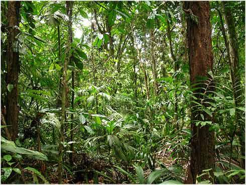 Los biomas agosto 2012 - El tiempo en macanet de la selva ...