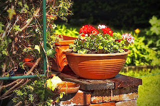 bowl-of-flowers-on-a-garden-wall