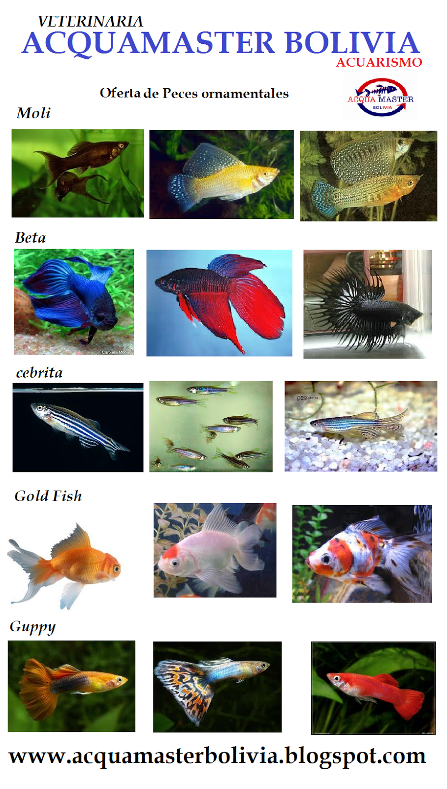 Empresa veterinaria acquamaster bolivia peces ornamentales for Manual de peces ornamentales