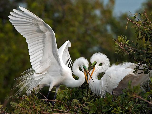 Couple White Bird Wallpaper