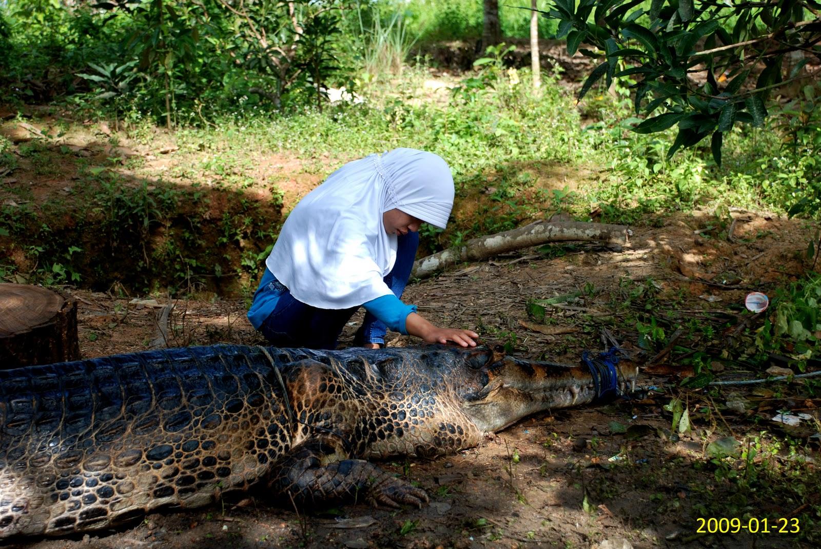 Questões e Fatos sobre Crocodilianos gigantes: Transferência de debate da comunidade Conflitos Selvagens.  - Página 2 Girl+tomi+yu