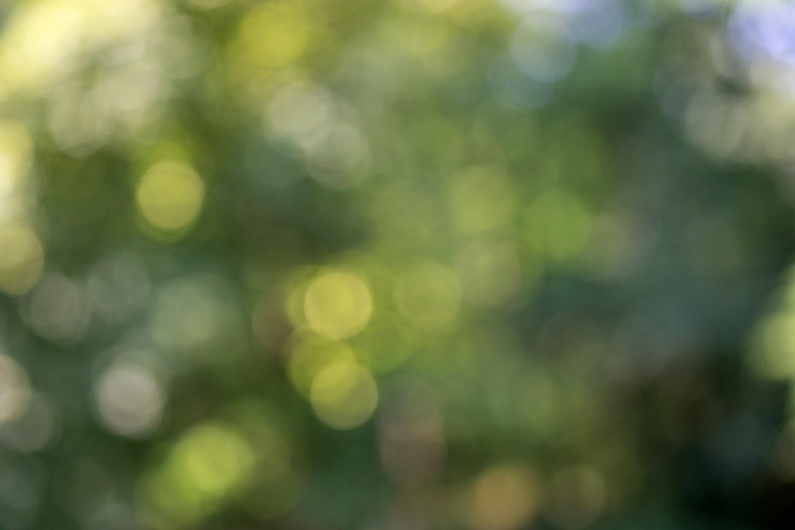 Sony A7 + Sony FE 70-200mm f/4 G OSS