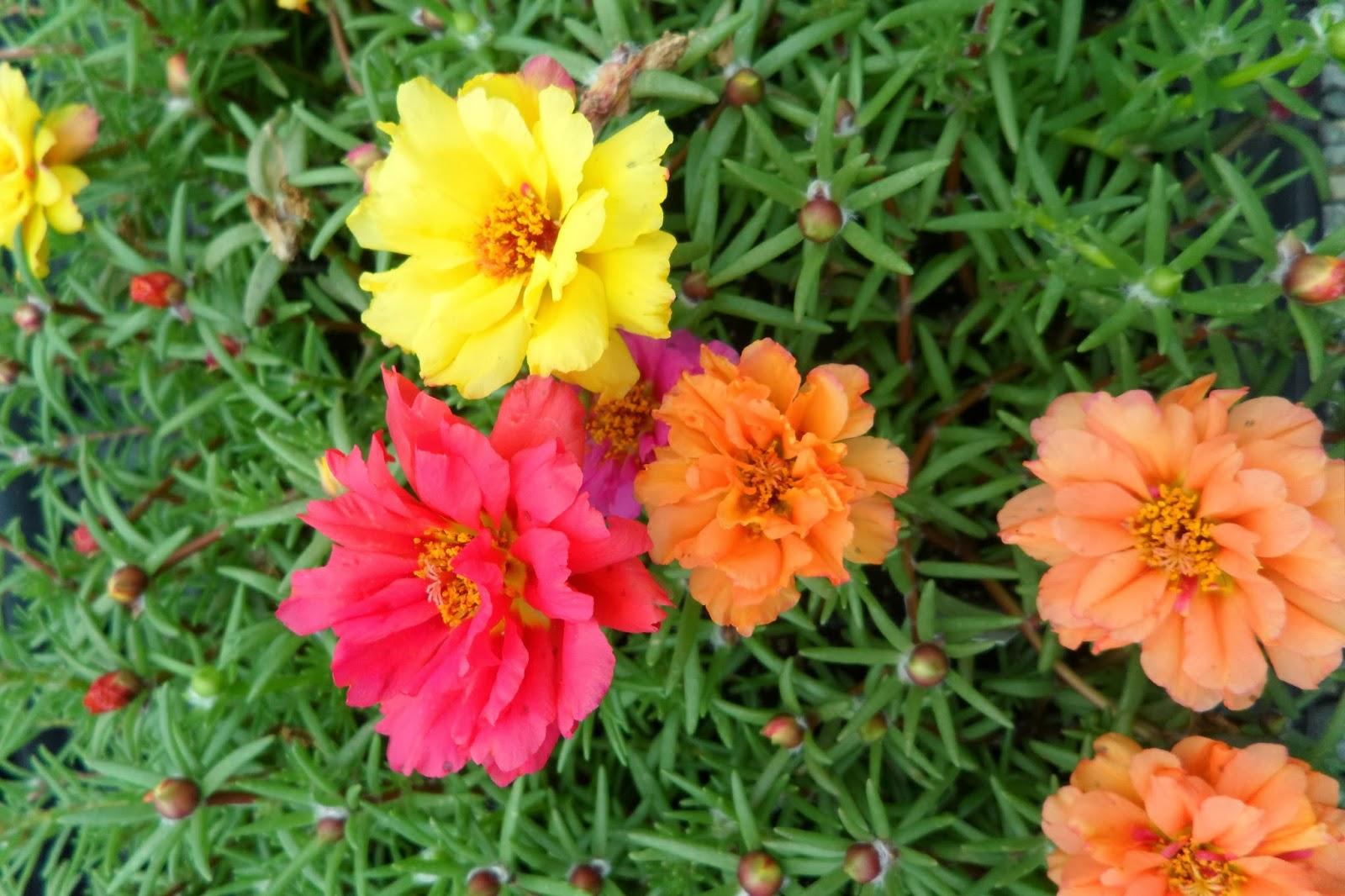 Коврики садовые цветы фото