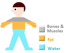 A visual representation of the components of our body. A partial silhouette of a person representing the amount of water, fat, and bone and muscles in our bodies.