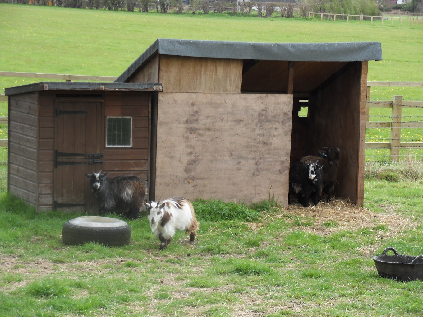 http://1.bp.blogspot.com/-JVW6yfQ9fnI/T5MRxBIOPsI/AAAAAAAAlMg/J8ptPtpkEqE/s1600/goats.JPG