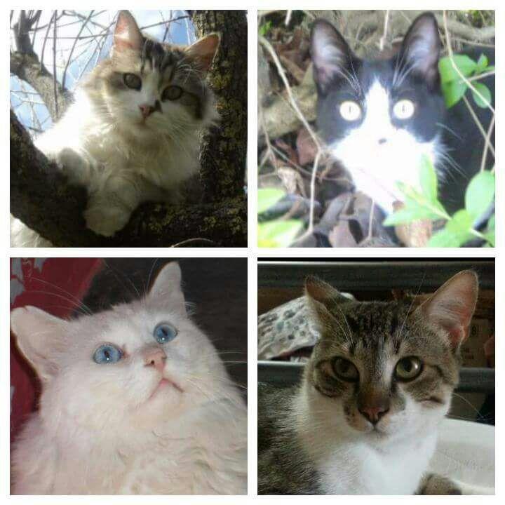 I miei quattro moschettieri
