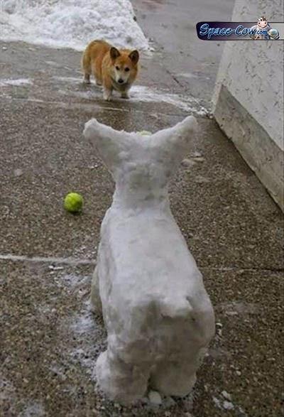 funny cute corgi picture