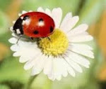 """♥ Este blog """"nasceu"""" dia 04/11/2011"""