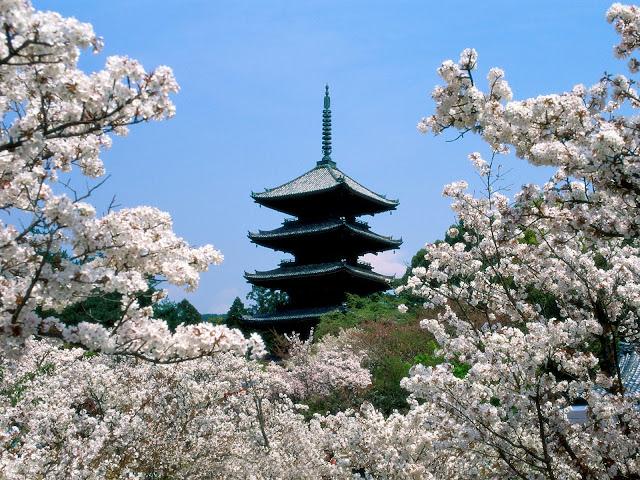Ceresos Templo Ninna-ji, Kyoto, Japón