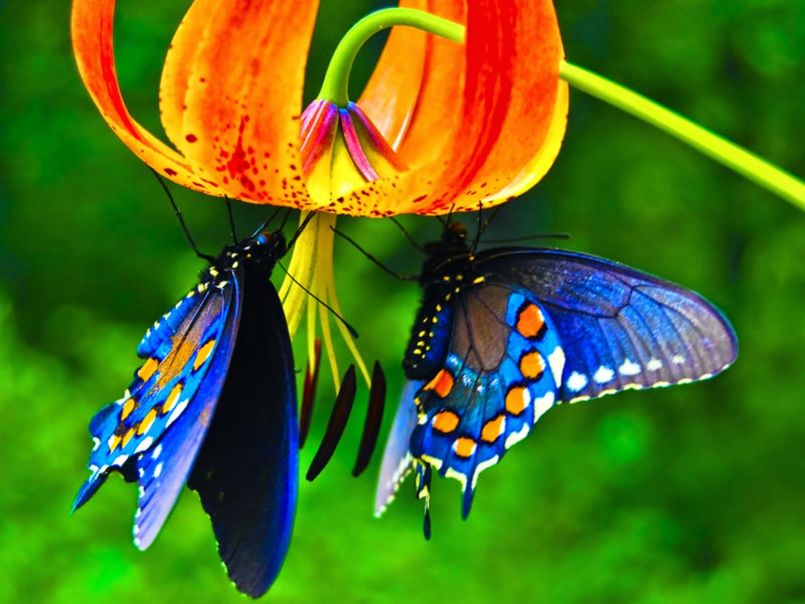 Hình ảnh bướm đẹp (18+)