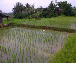 Tanah Dijual Di Cisaat Sukabumi