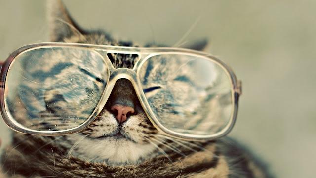 قط مضحك يلبس نظارة