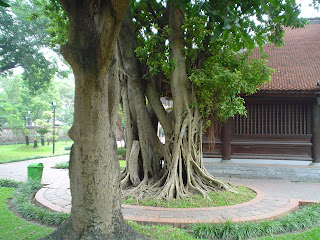 Garden at the Temple of the literature, Hanoi, Vietnam