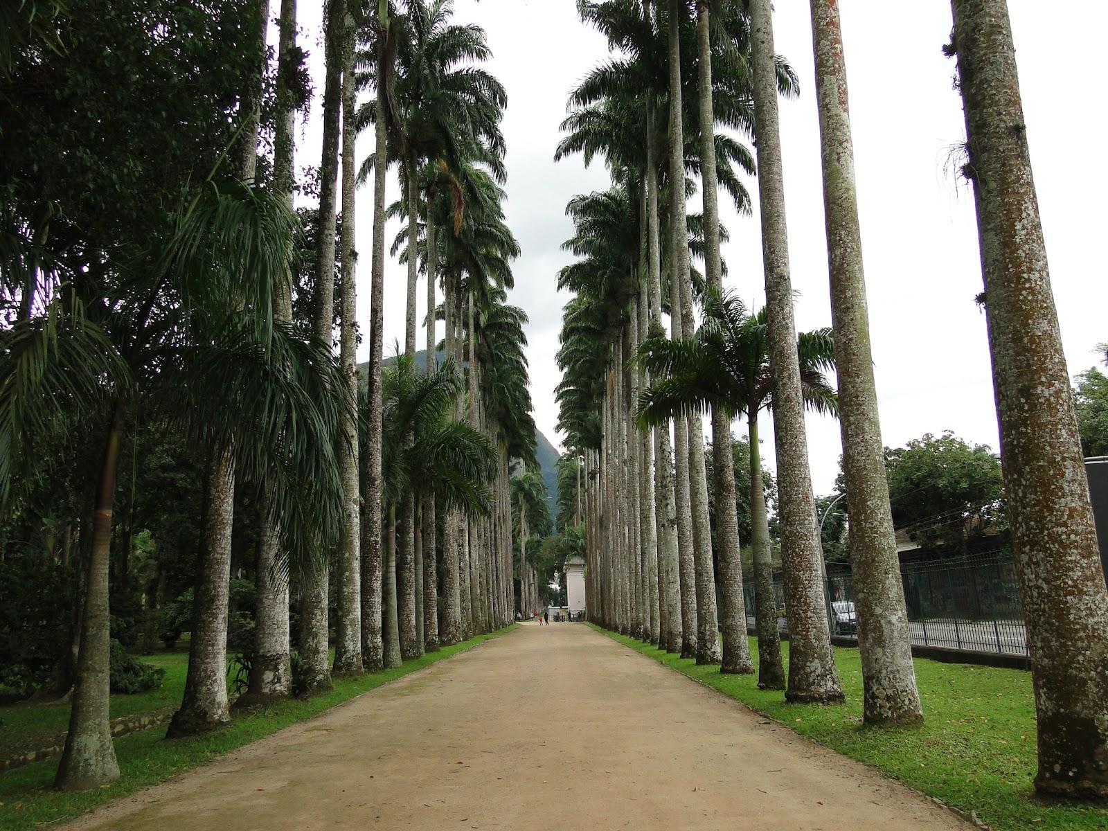 fotos jardim botanico do rio de janeiro:Palmeiras superam em altura as demais árvores do Jardim botânico, do