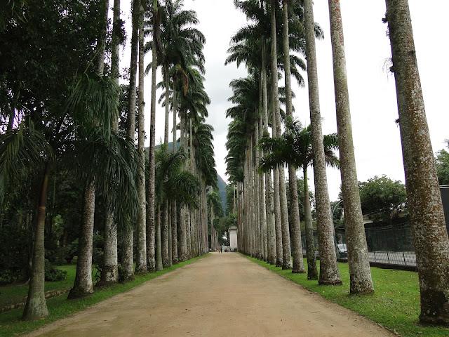 Jardim Botânico Do Rio De Janeiro ~ Cerca Para Jardim Rio De Janeiro
