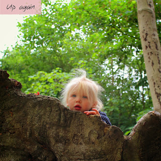 A toddler peering out of the top of a hollowed out tree trunk