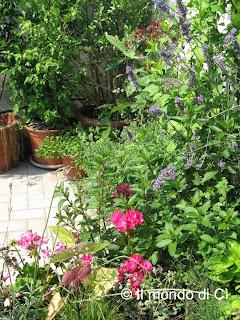 Le vista sul terrazzo dalla cucina, aromatiche e fiori per sentirsi in mezzo al verde anche in città