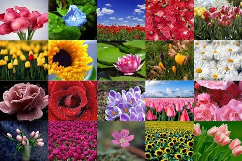 Fotografías de flores para el Día de las Madres I