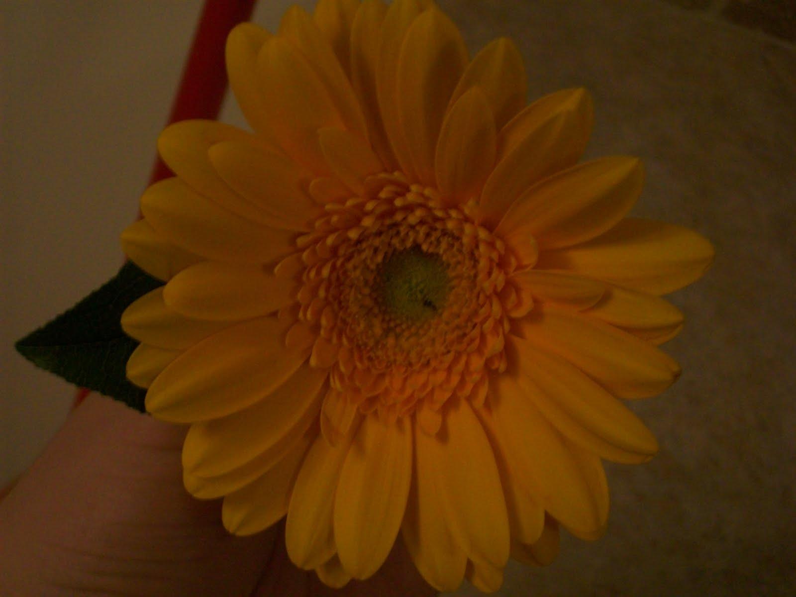 Hair Flowers Diy 2 Gerbera Daisy Wedding Flowers Made Easy