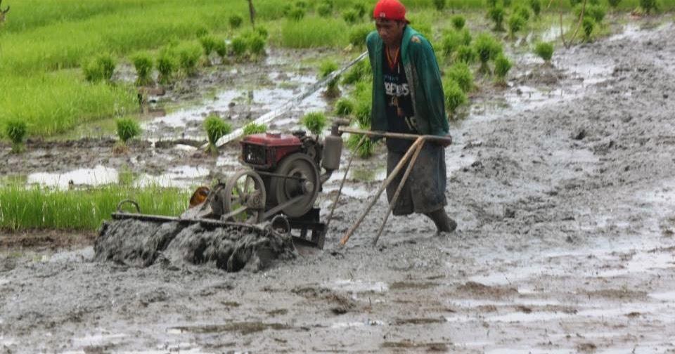 AKLAN FORUM journal: Patronize NFA milled rice, urges NFA-Aklan