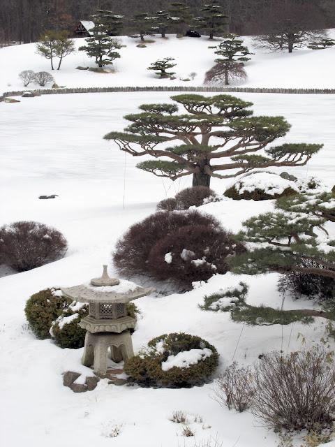 Pine tree and stone lantern