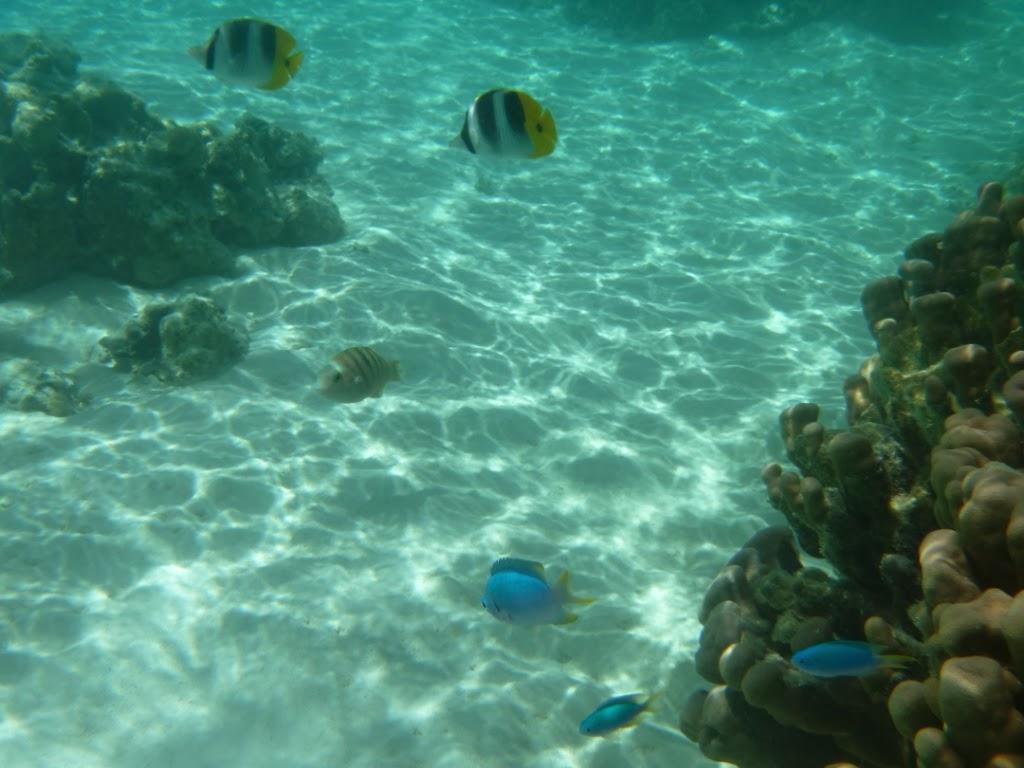 Moorea - Polynésie