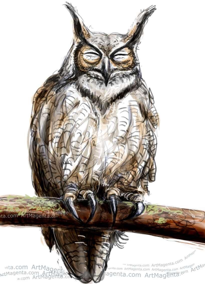 Laughing Owl sketch painting. Bird art drawing by illustrator Artmagenta