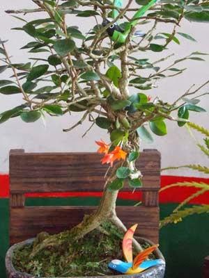 Orquídea em bonsai